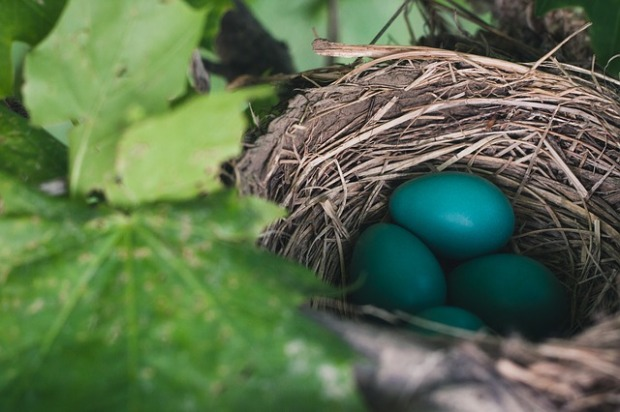 nest-843231_640